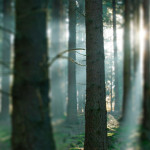 cropped-forest_sunlight2.jpg